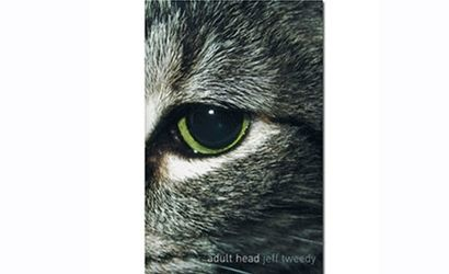 Adult Head - Jeff Tweedy (BOOK) by Wilco